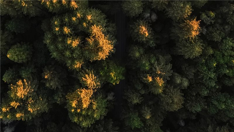 Aerial View of Green Trees - Mace Group