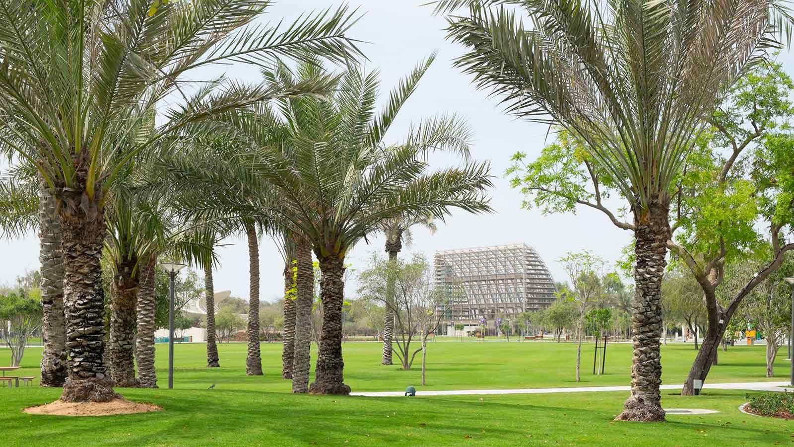 Palm Trees at Umm Al Emarat Park - Mace Group